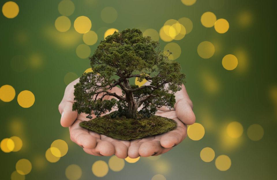 Le bonsai permet de créer un lien avec la nature